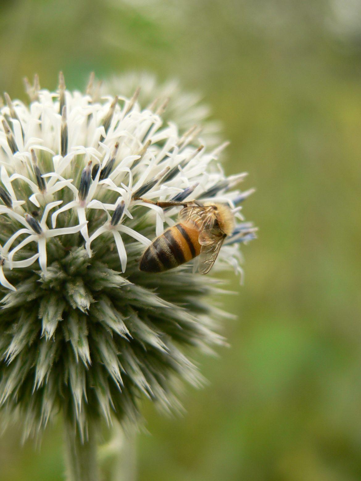 Portland Acupuncturist Talks Natural Allergy Relief